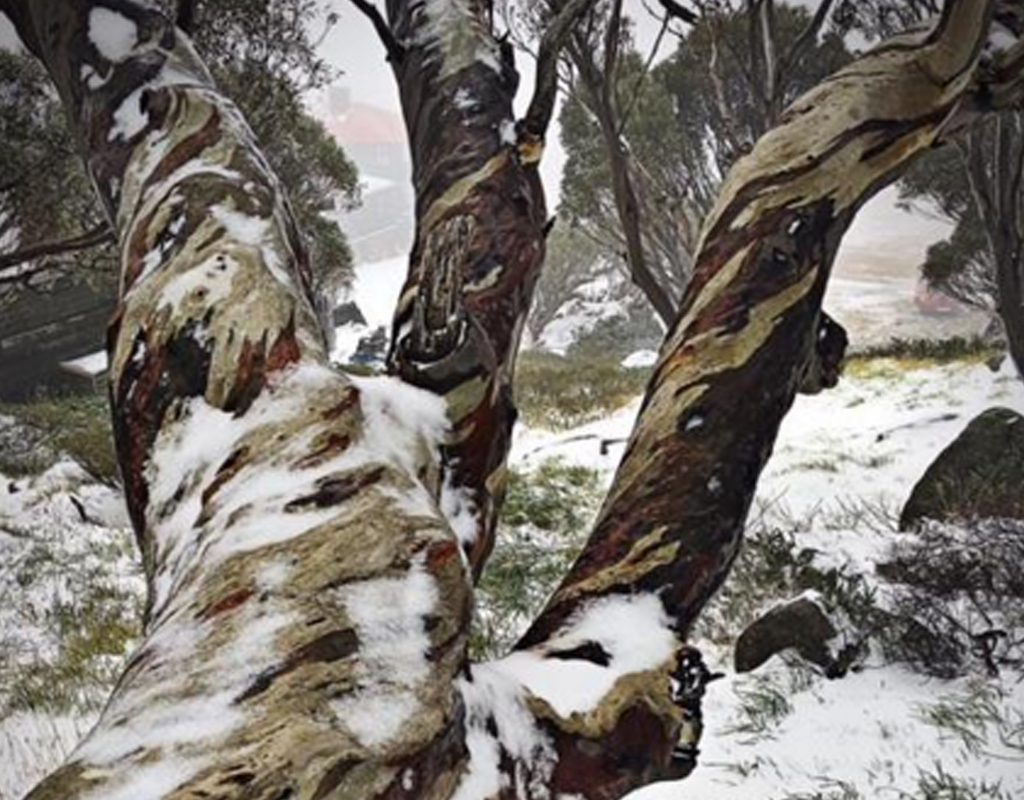 Snow at Charlotte Pass. (Facebook / Charlotte Pass Snow Resort)