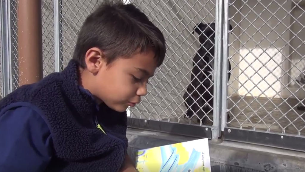 A six-year-old boy visits an animal shelter to read books to the dogs. (Saving Carson Shelter Dogs)