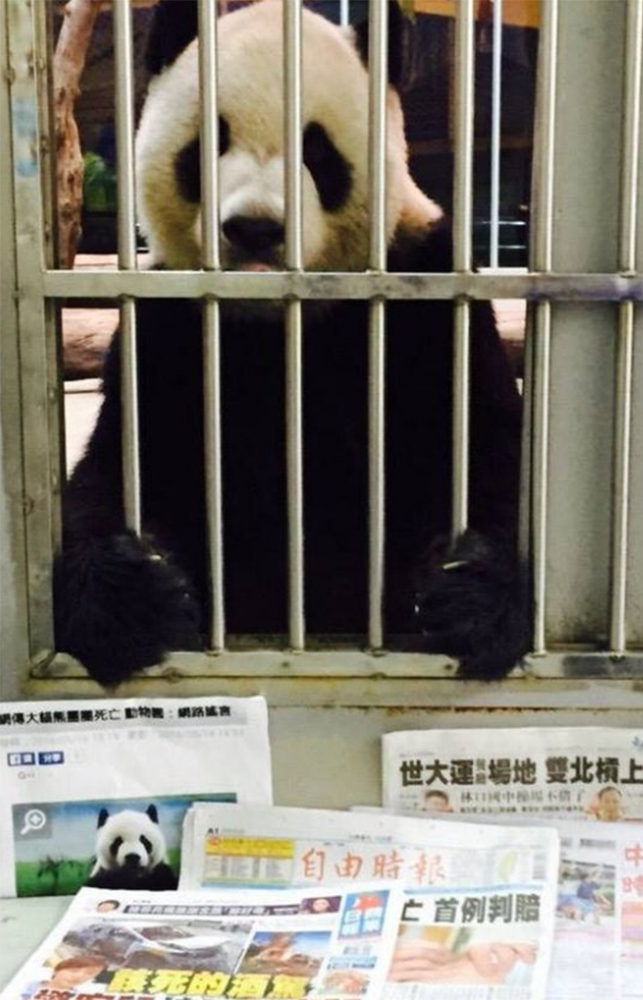 Zoo stages bizarre 'proof of life' picture amid panda death rumours