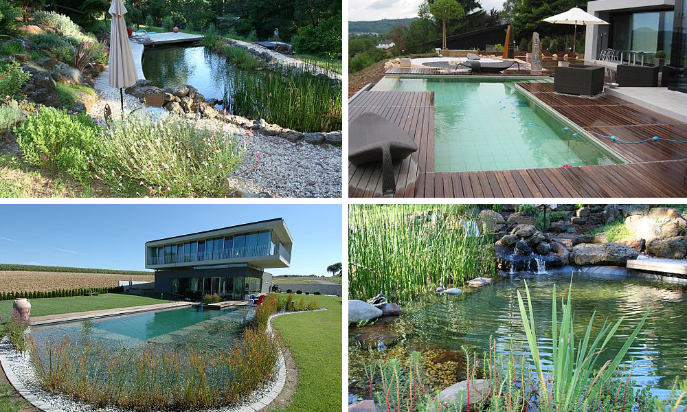 Natural pools are making a come back 9homes for Pool design company radom