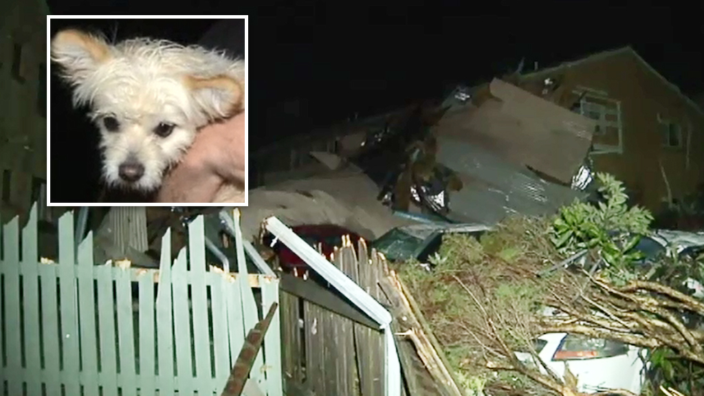 One resident had to dig through rubble to save his pet dog. (9NEWS)
