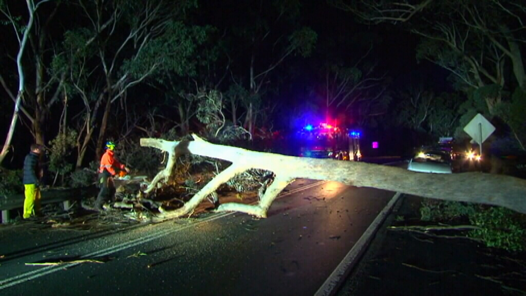Winds brought down trees in the Blue Mountains. (9NEWS)