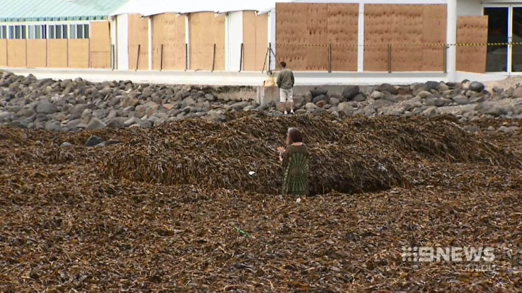 Beachgoers were baffled by the thick blanket of seaweed. (9NEWS)