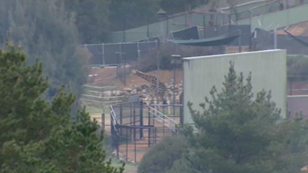 Fire crews extinguish blaze at National Zoo and Aquarium in Canberra