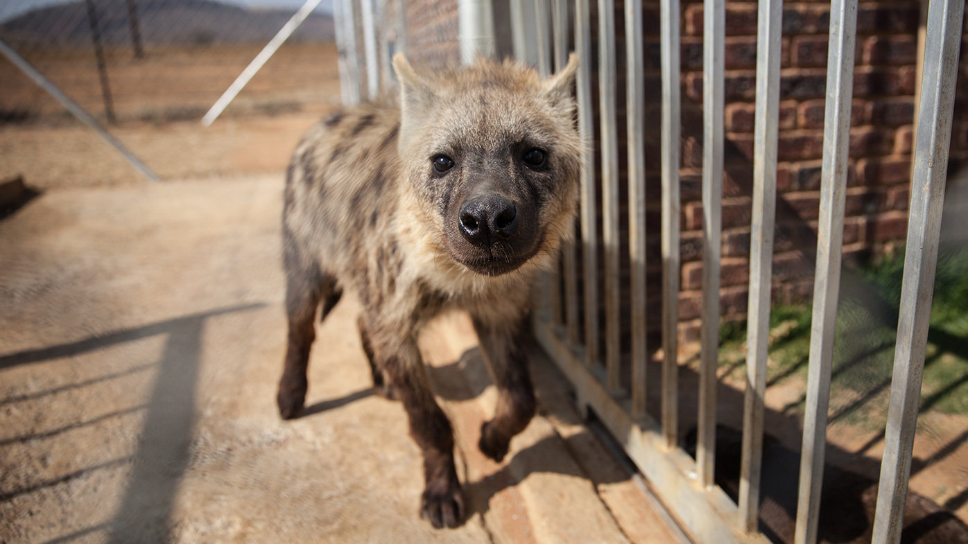 Teen attacked by hyena in South Africa's Kruger Park