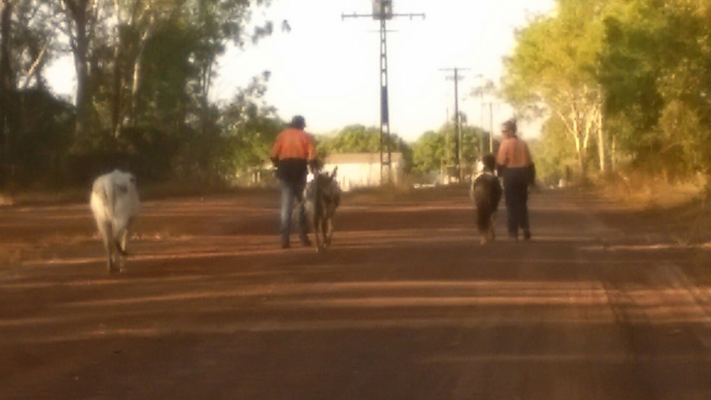The animals have since been returned home. (9NEWS)