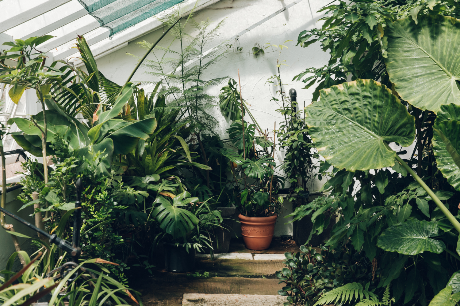 Five Plant Obsessed Instagram Accounts To Follow