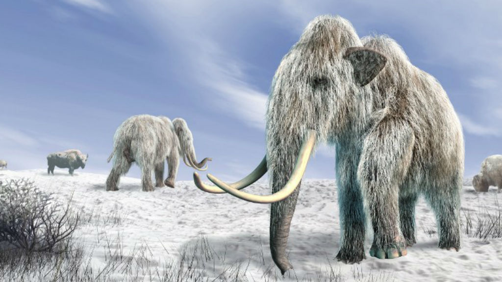 Woolly mammoths may have died of thirst
