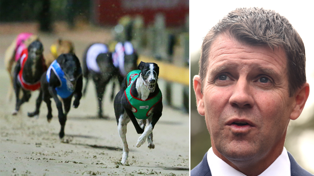 NSW Government spend long night debating greyhound racing bill