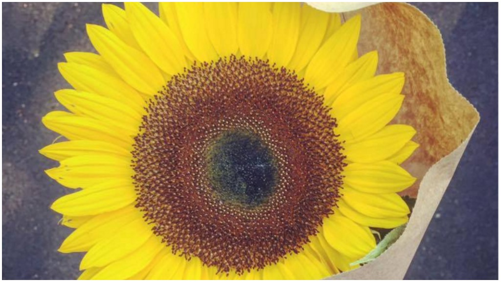 Man's gift of sunflower to mourning widow becomes social media sensation