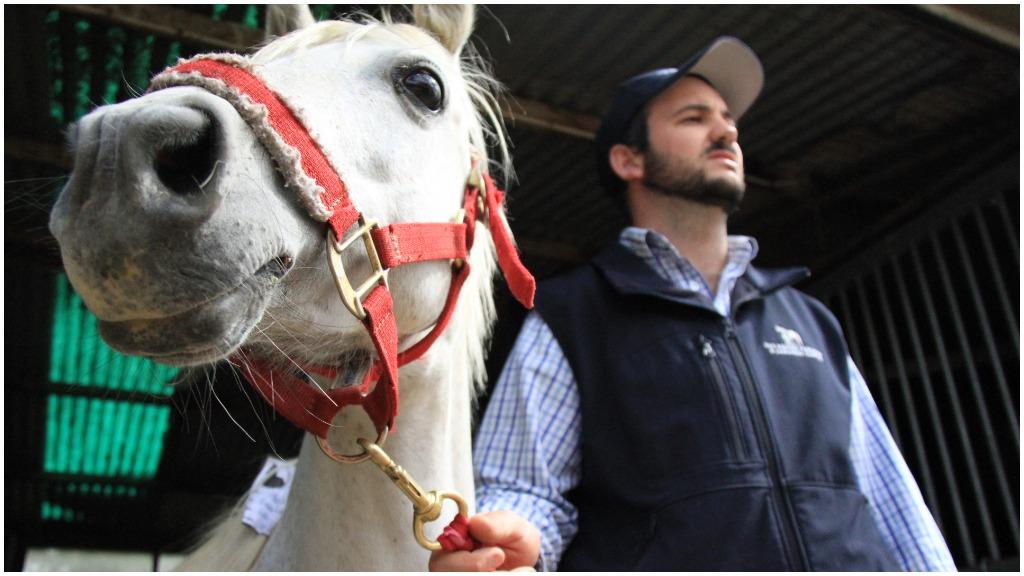 An Australian horse with crippling laminitis received a 3D prosthetic. (CSIRO)