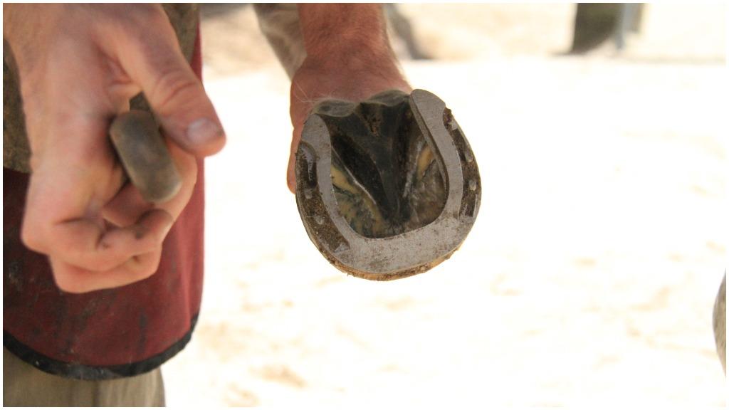 Scientists at Australia's CSIRO printed an injured horse a prosthetic horseshoe. (CSIRO)