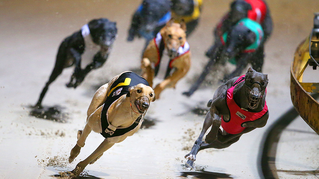 NSW greyhound bill successfully passes parliament