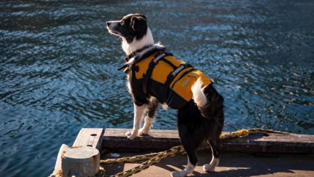 Dog recruited as official 'seagull scarer' for Australian National Maritime Museum