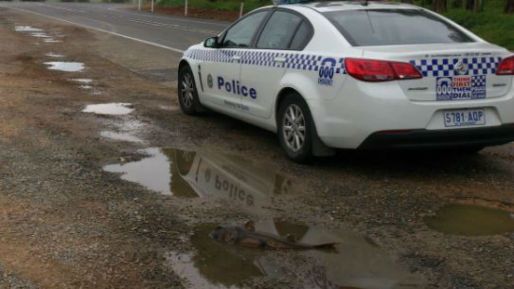 Police believe the shark may have been caught earlier today and dumped. (SA police)