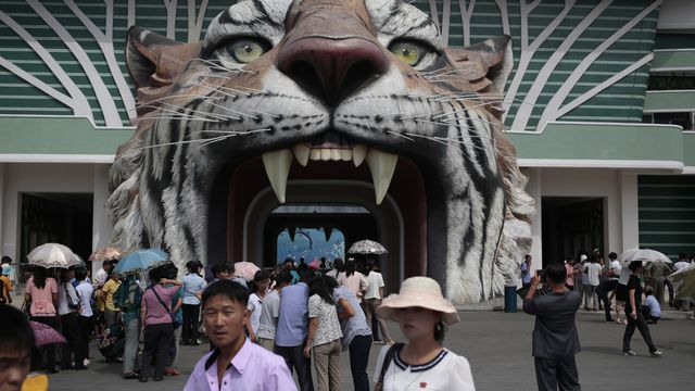 Dogs a big attraction at North Korea zoo