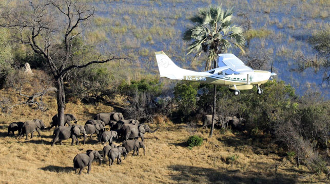 A fly over of Botswana, Africa during a survey of savanna elephants on the continent.