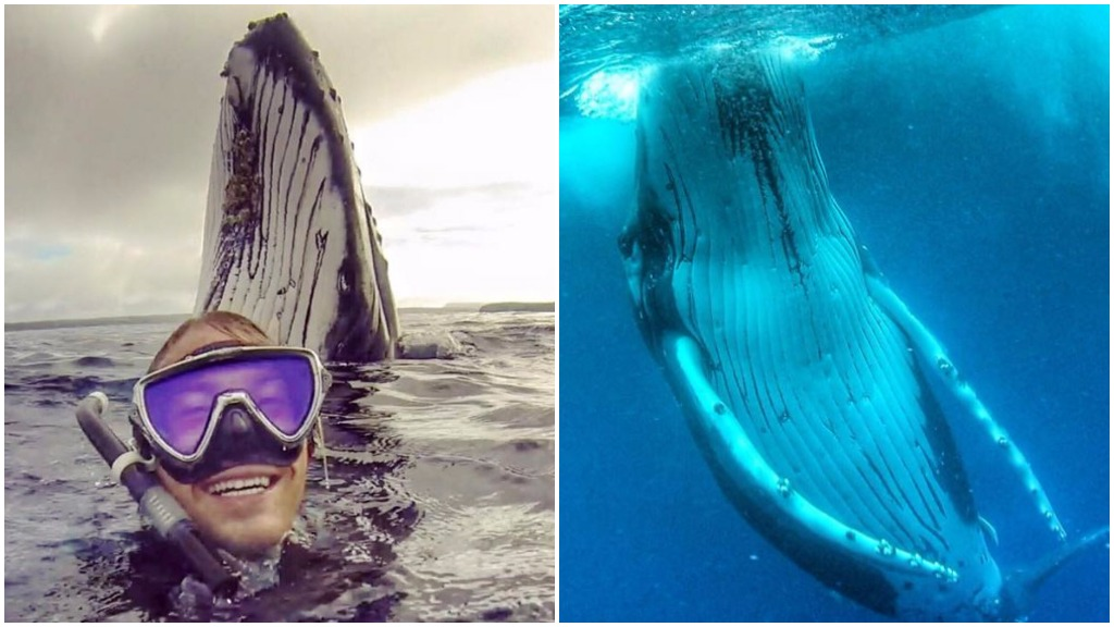 Sydney tradie's up close and personal encounter with a whale receives worldwide attention