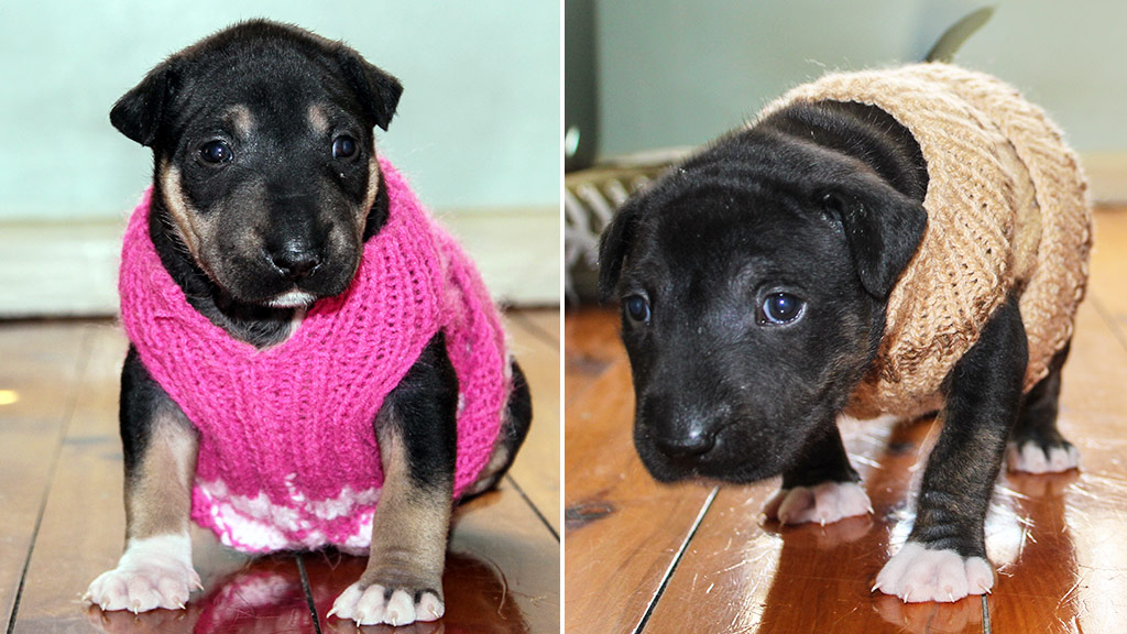 Aussie volunteers knit coats to help keep shelter dogs warm