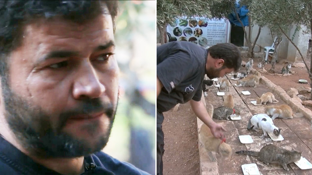Man cares for more than a hundred cats abandoned by owners fleeing homes in Syria
