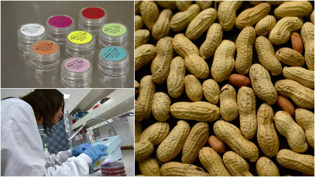 Treatment for peanut allergies could be available in five years according to Melbourne researcher