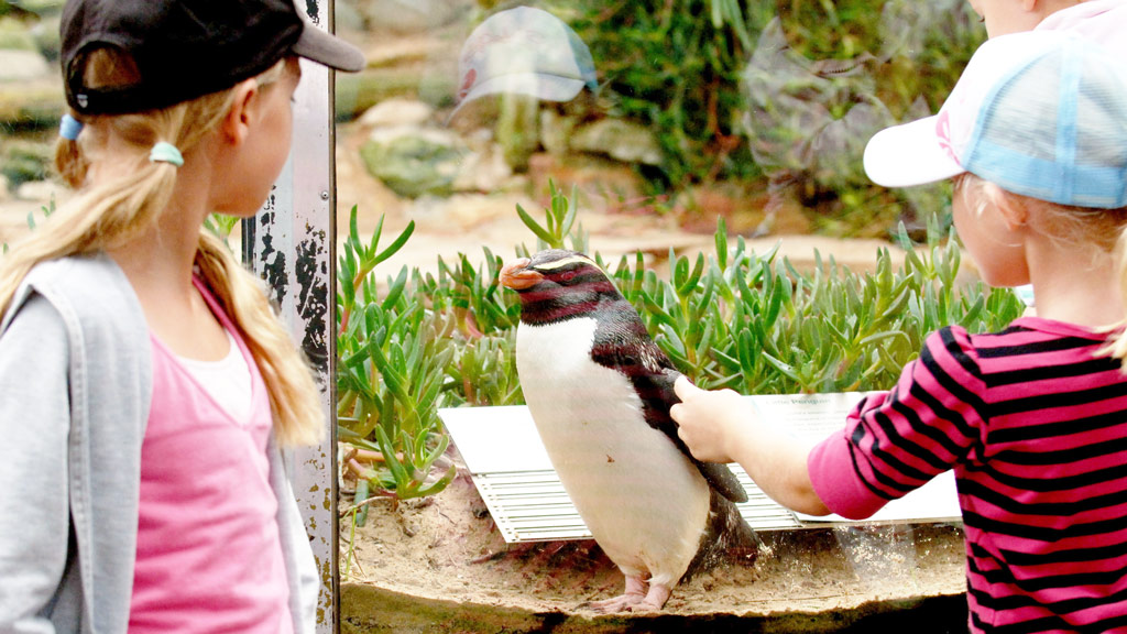 Taronga Zoo to open doors an hour early for guests with autism