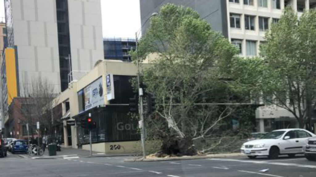 A tree is uprooted, blocking traffic on King Street in Melbourne's CBD. (Supplied: Fiona McNeil)
