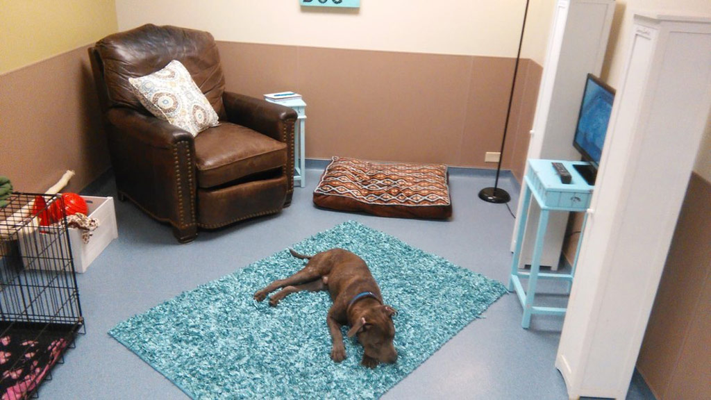 Shelter offers 'real-life room' to help dogs adjust and de-stress