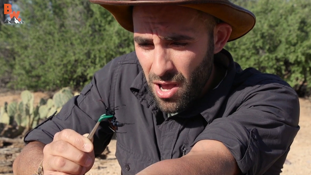 Coyote Peterson preparing to be stung by tarantula hawk.