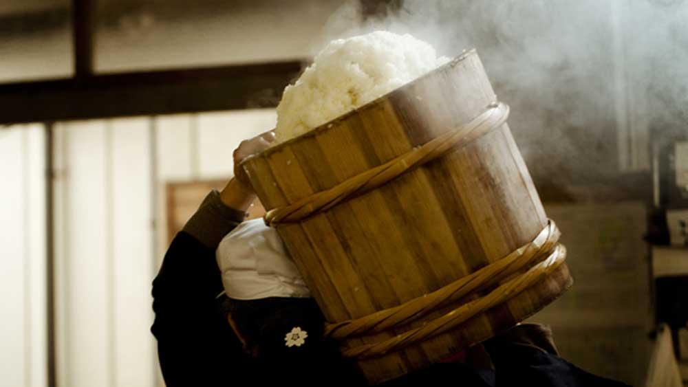 Sake rice at the brewery