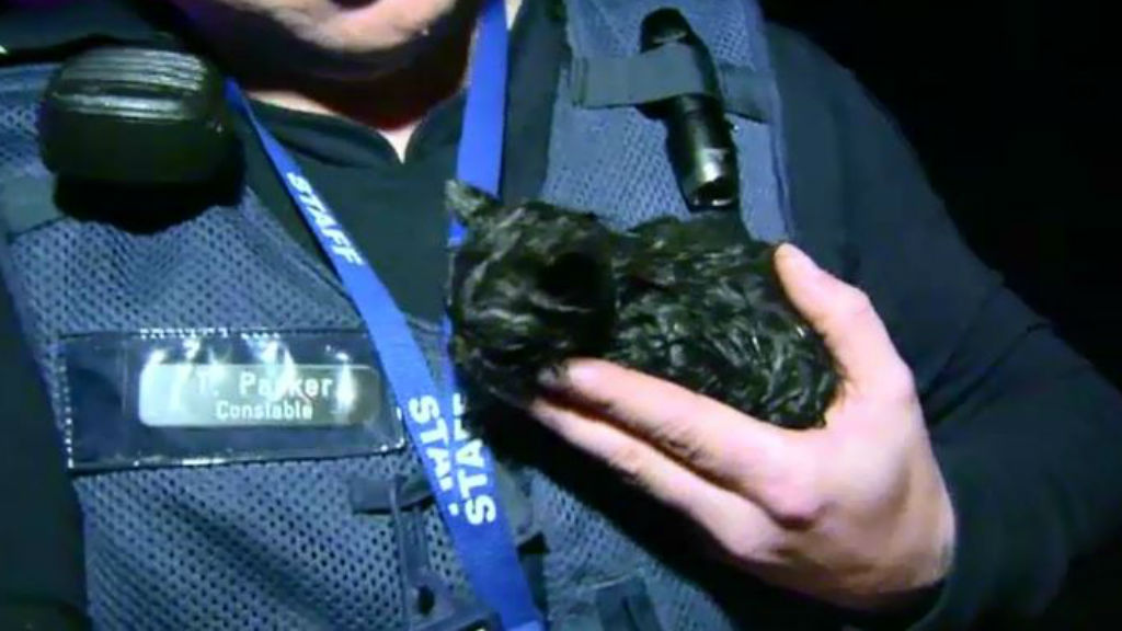 Tiny black kitten rescued from burning bikies clubhouse in Melbourne