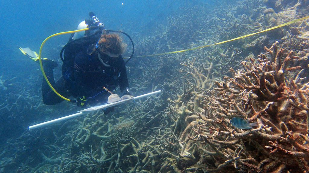 Mass bleaching sparks record coral kill-off on Great Barrier Reef