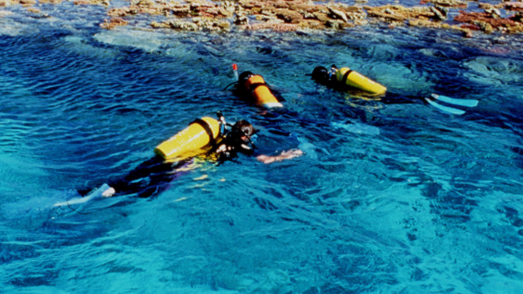 Six diving, snorkelling deaths in five days prompt call for review
