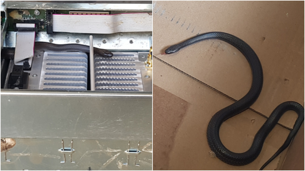 Stowaway snakes hitched a ride on Queensland police helicopter