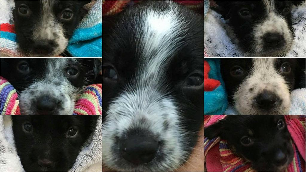 Seven puppies abandoned in Queensland skip bin
