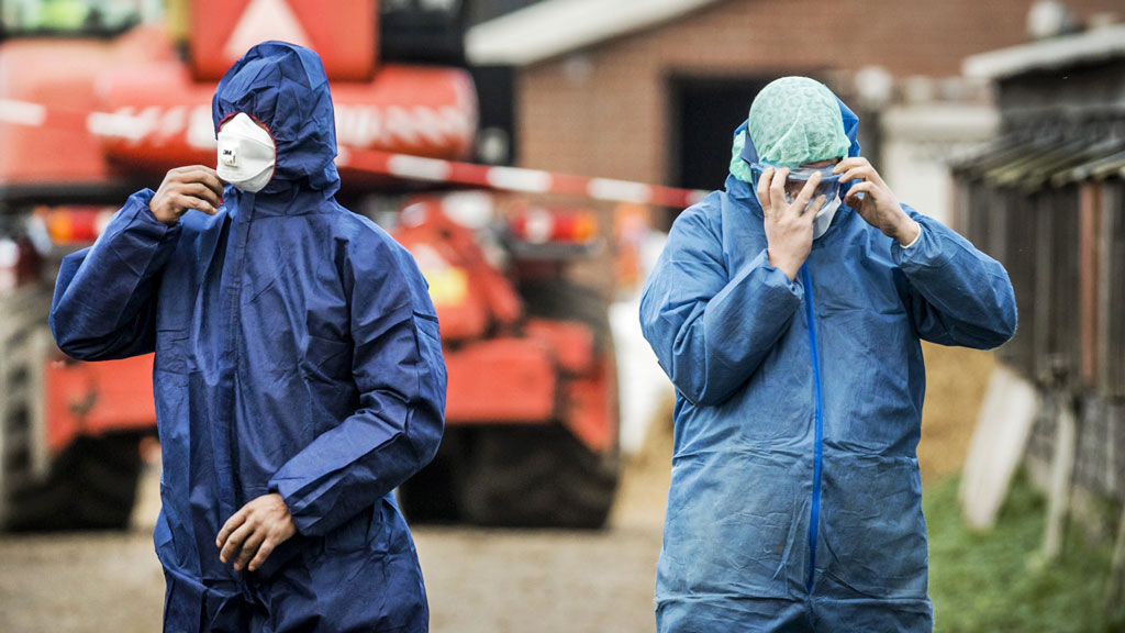 Dutch officials kill 190,000 ducks to contain bird flu outbreak