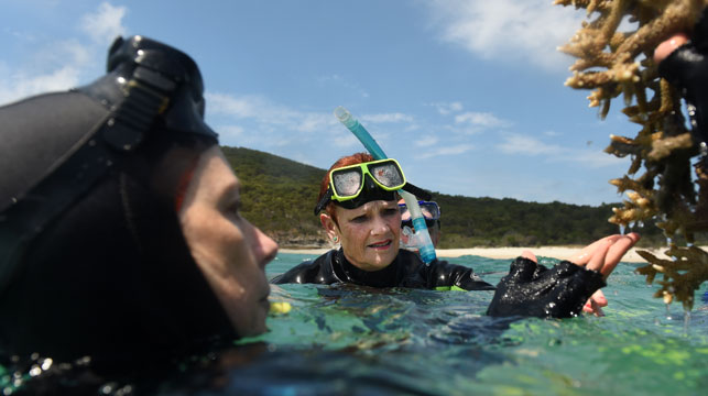 Senator Hanson 'coral incident' under investigation by reef officials