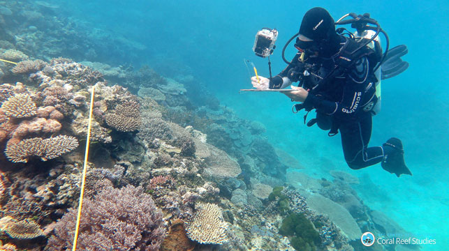 Northern Great Barrier Reef in dire straits, study finds