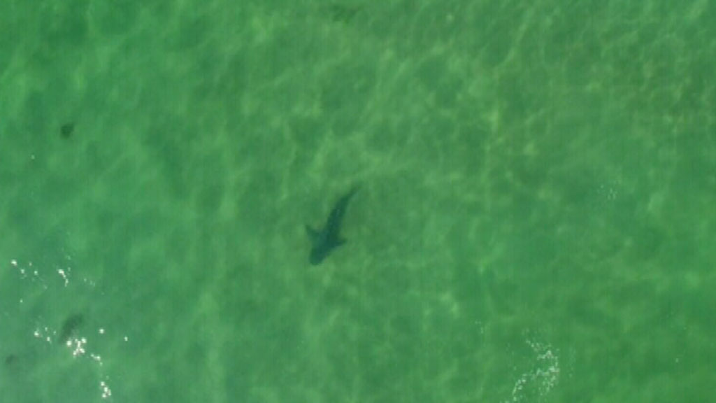 Chopper patrols launched following 27 shark sightings on Victorian beaches