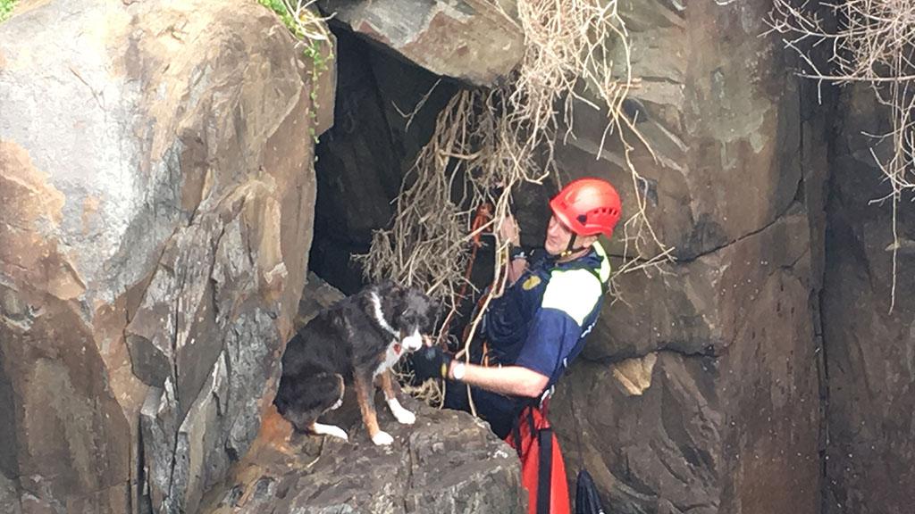 Pet dog saved from Tasmanian blow hole