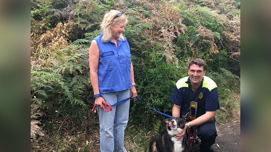 Grace the spaniel was returned to her owners uninjured. (Tasmania Police)