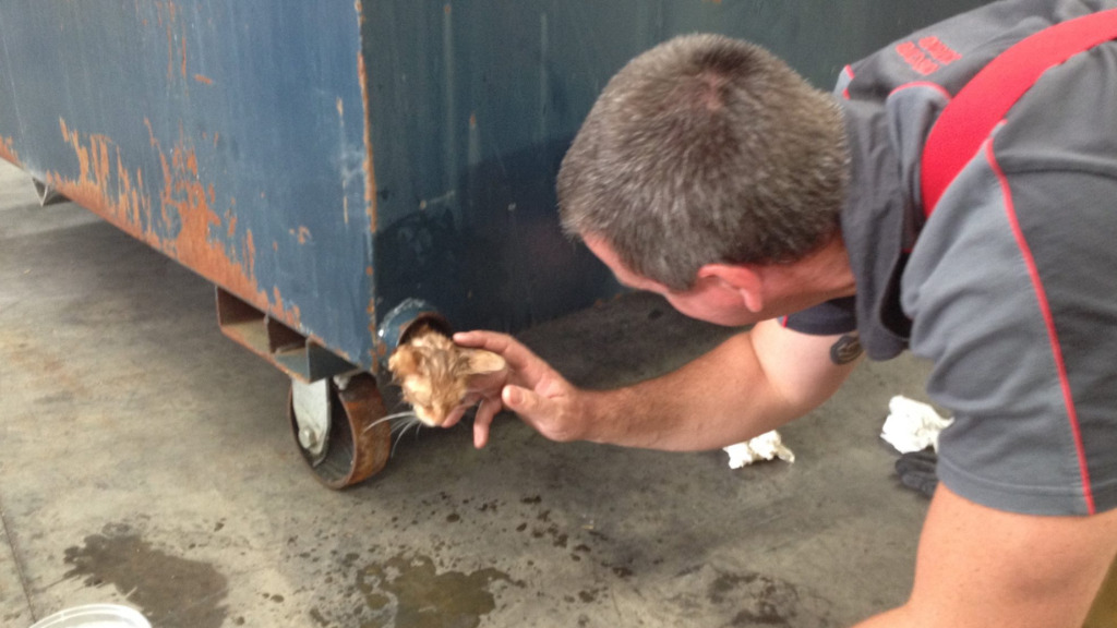 Stuck kitten rescued from Melbourne dumpster pipe