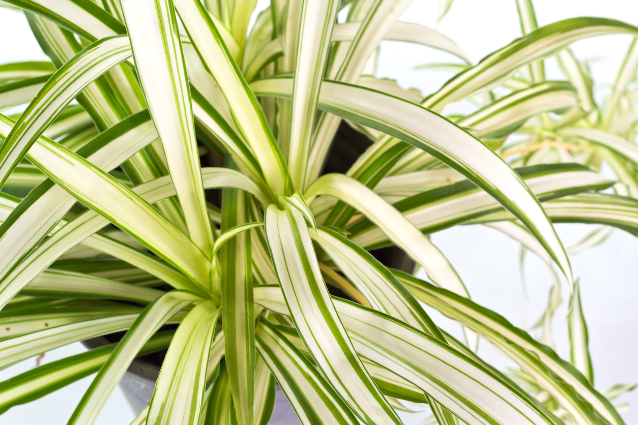 Indoor plants that will help cool your home 9homes - Cool plants to grow inside ...