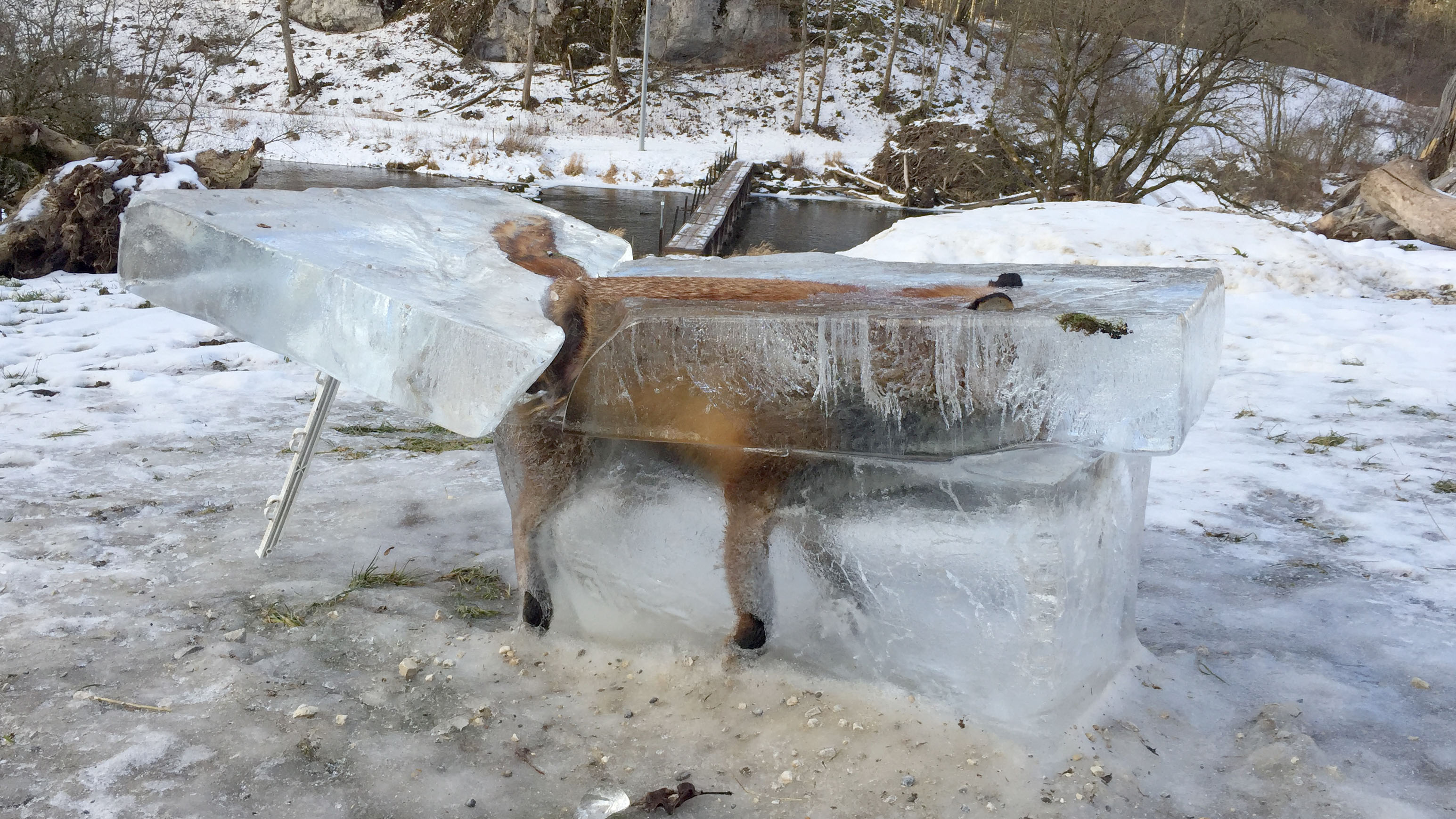 Fox found frozen in ice during Europe's icy winter