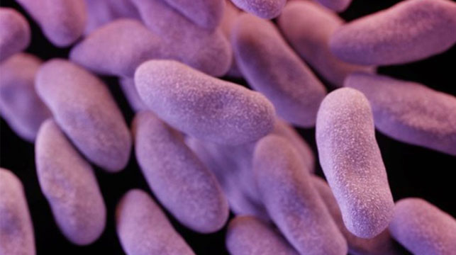 Woman dies from superbug resistant to every antibiotic