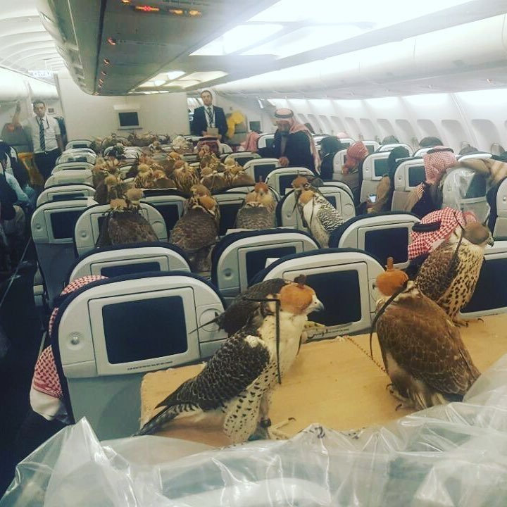 Image result for Filthy Rich Saudi Prince Buys Air-Flight Tickets for 80 Hawks (Photo)