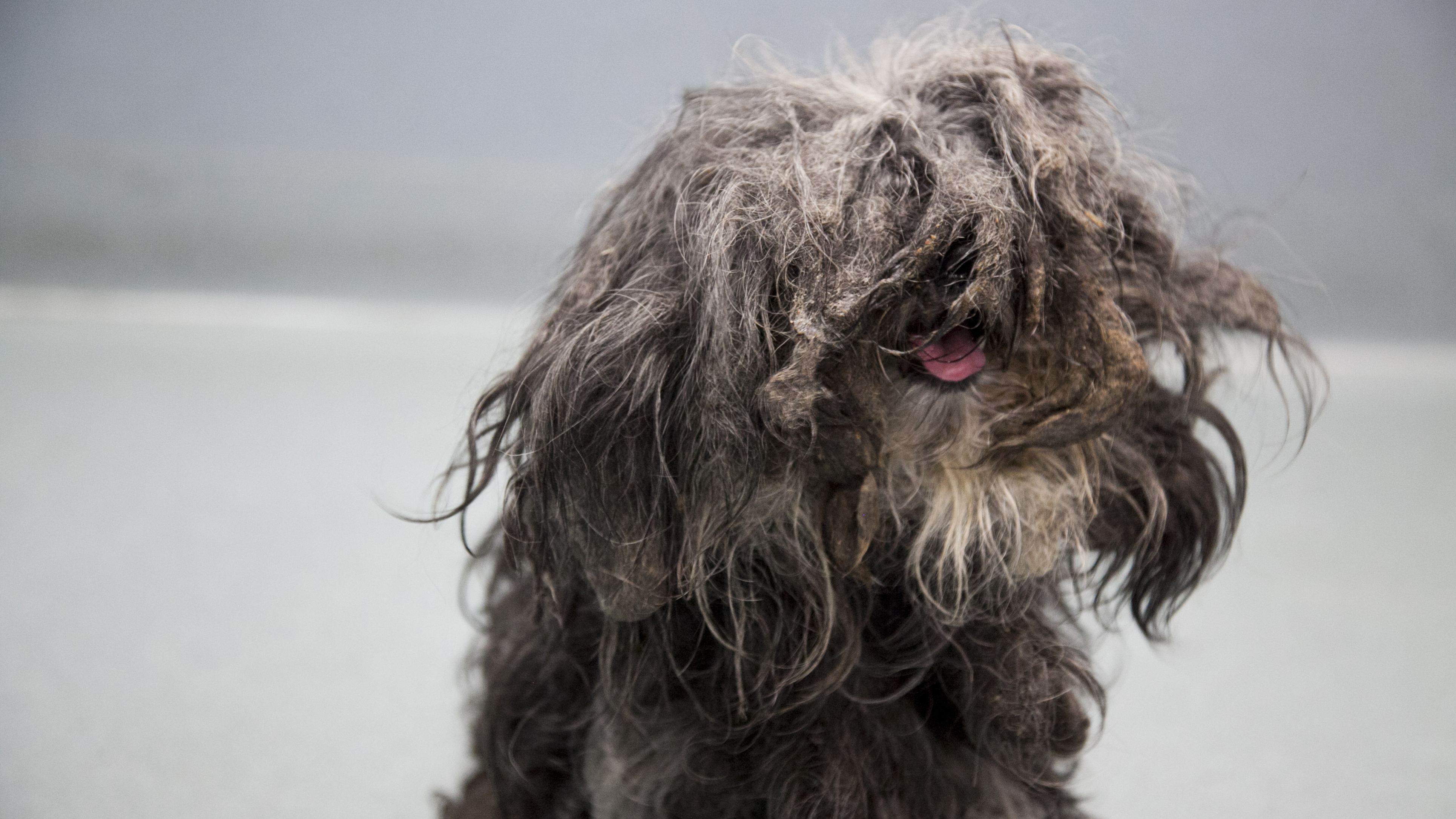 The dog was covered in over 650 grams of matted fur. (RSPCA)