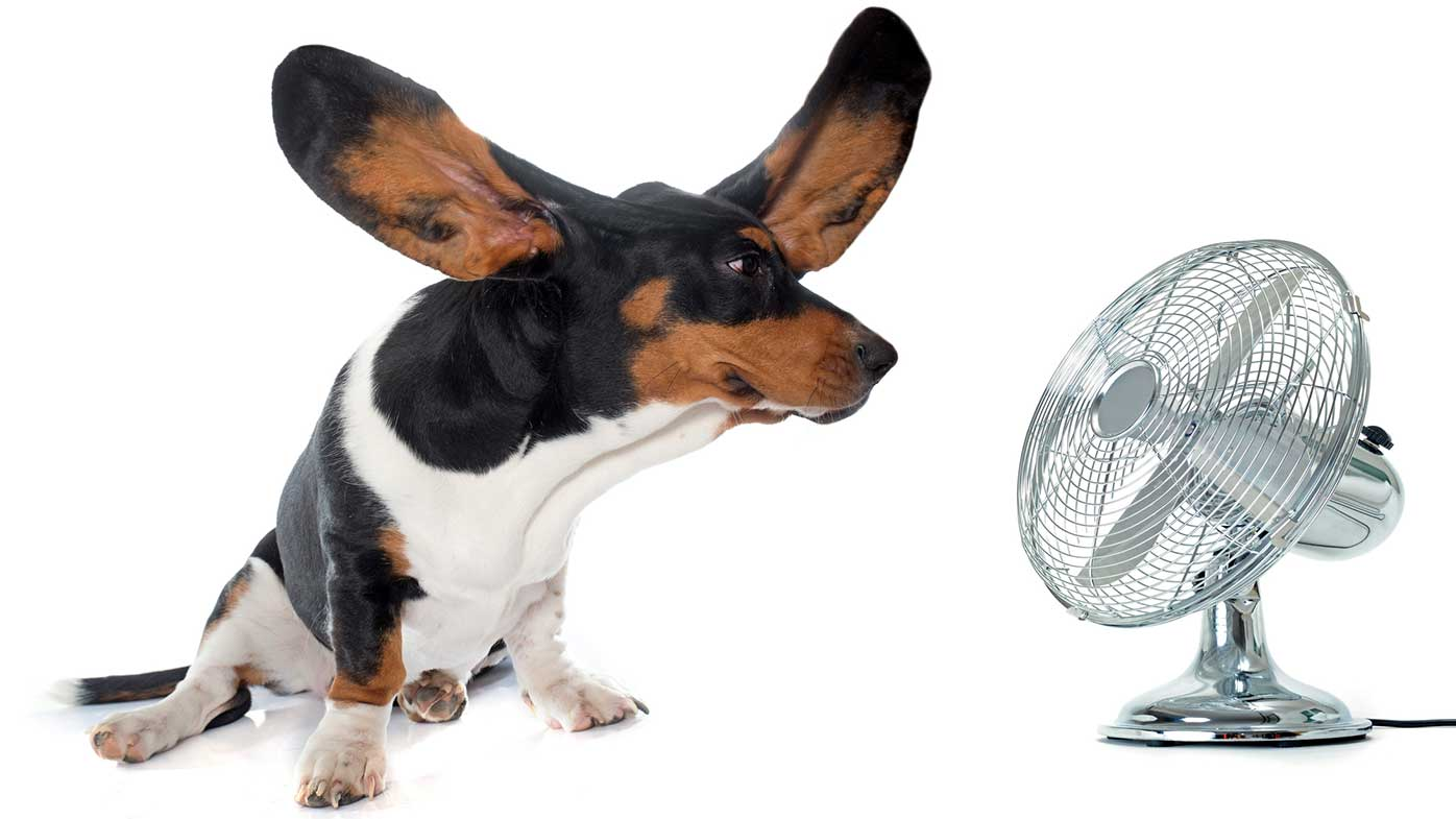 How To Keep Dogs Cool On Hot Days