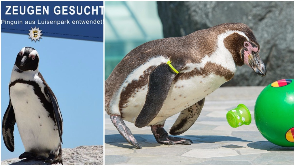 Penguin snatched from German zoo