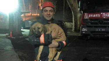 The dog was rescued after spending 10 days in a well. (Beykoz Fire Department)